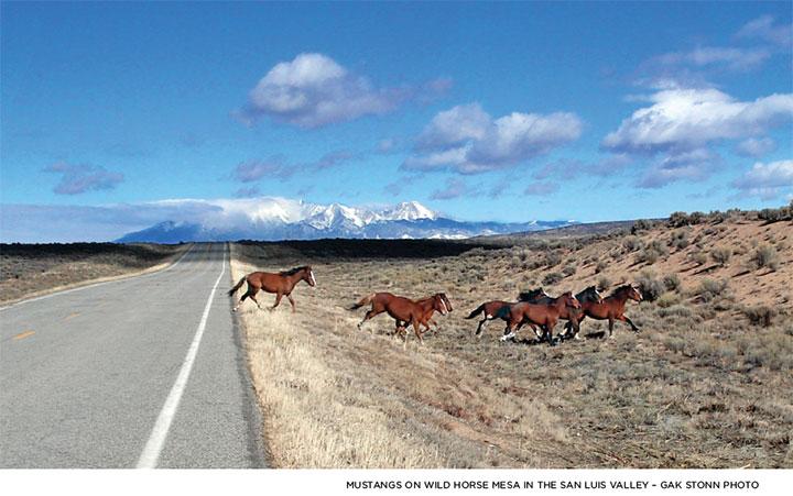 Gakk Stonn, Wild Horses